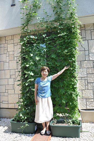 伊藤さんちのグリーンカーテン全景