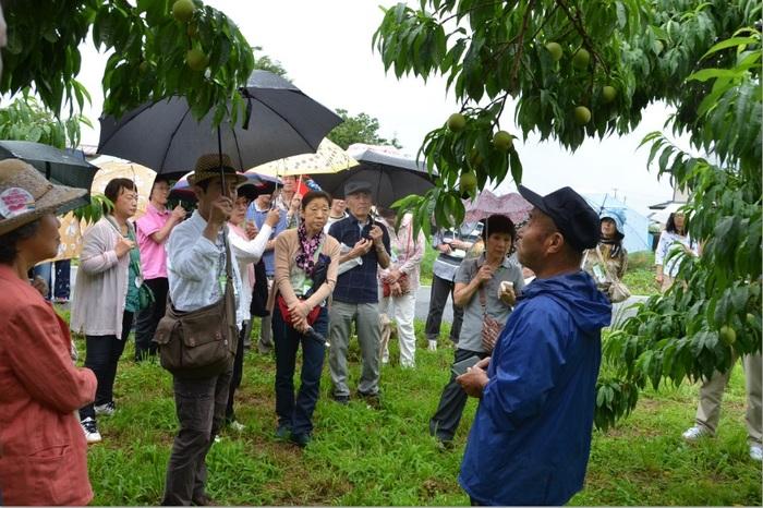コープの産直桃の園地で生産者の菊池さんから説明を聞く