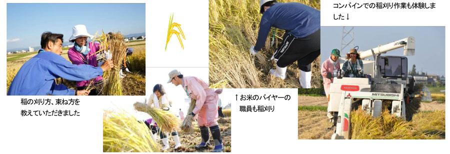 http://www.ucoop.or.jp/hiroba/report/files/141029hitomebore2.jpg