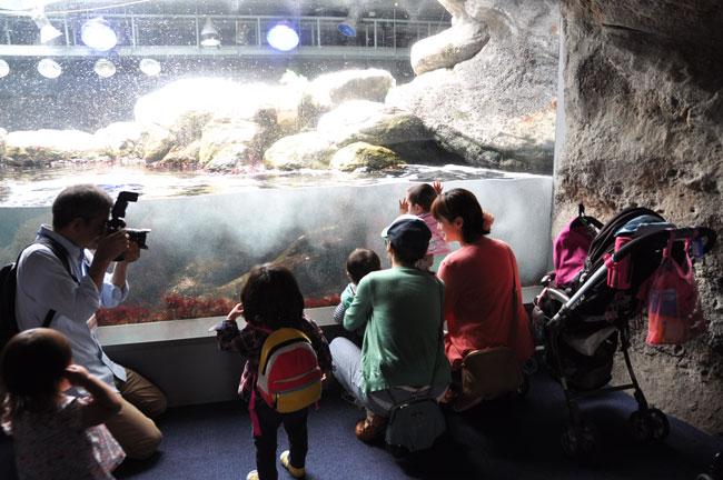 江ノ島水族館の取材です
