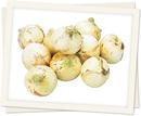 onion_pic_00-1.jpg