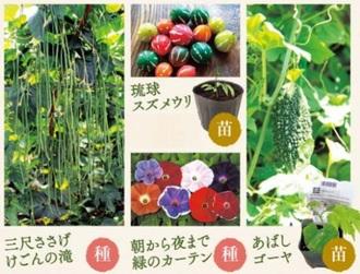 mio4月号で紹介しているつる植物