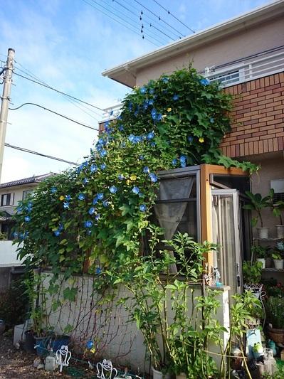 201508_green14.jpg
