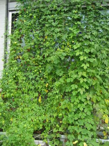 201508_green17.jpg