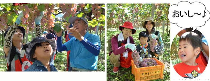 20151004_-winegrapesyukaku2.jpg