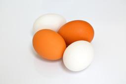 卵イメージ.jpg