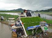 飼料用米の田植え