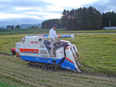 これからが稲刈りの本番です