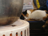 猫はストーブのそばで丸くなっています