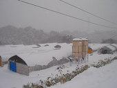 雪が降り積もり宮農場は真っ白です