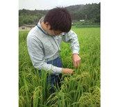 稲の不稔調査