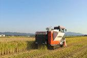 稲ワラを切り落とし、有機物として田んぼに還元