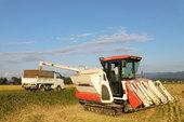 コンバイン(収穫機)のタンクに溜まった籾を、トラックに排出しております。