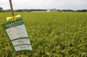 特別栽培米の立札