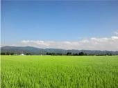 青空と稲穂が広がる田園風景