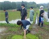 はぐくみ鶏の飼料用米の田植え 20150626