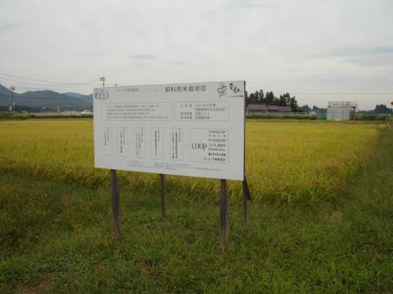 http://www.ucoop.or.jp/shouhin/shoku_shokuryo/sanchi/files/120924siryoumai.JPG