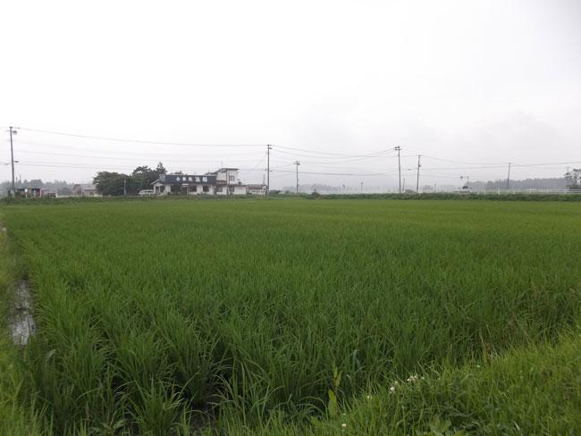 http://www.ucoop.or.jp/shouhin/shoku_shokuryo/sanchi/files/130710-2.jpg