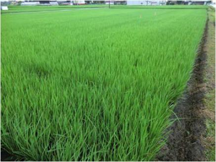 http://www.ucoop.or.jp/shouhin/shoku_shokuryo/sanchi/files/130725-1coop1.JPG