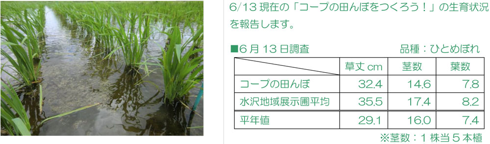 http://www.ucoop.or.jp/shouhin/shoku_shokuryo/sanchi/files/140613-6seiiku.jpg