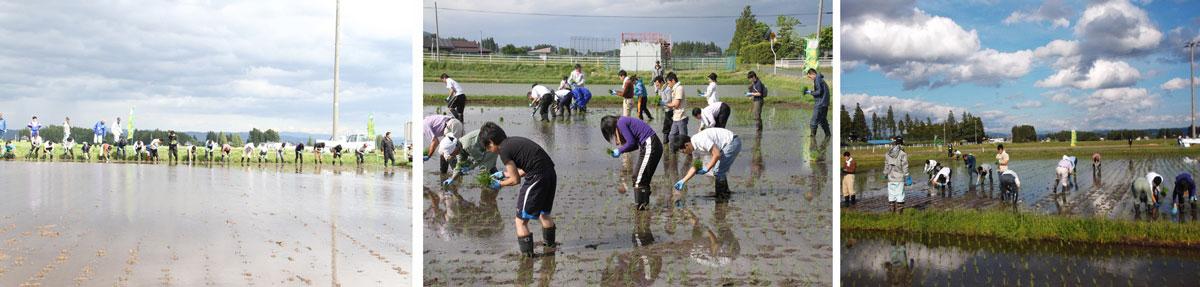 http://www.ucoop.or.jp/shouhin/shoku_shokuryo/sanchi/files/150529tyami3-5.jpg