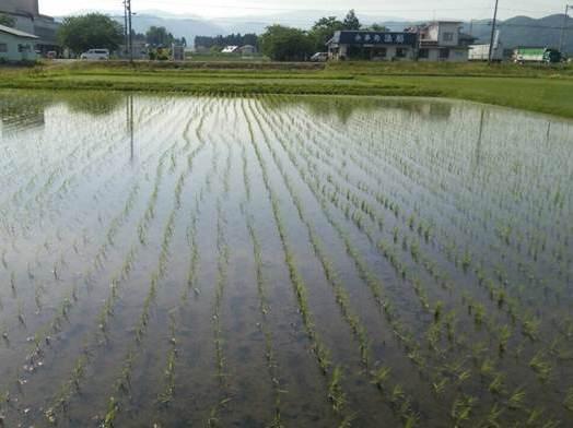 http://www.ucoop.or.jp/shouhin/shoku_shokuryo/sanchi/files/150602tanbo_01.jpg