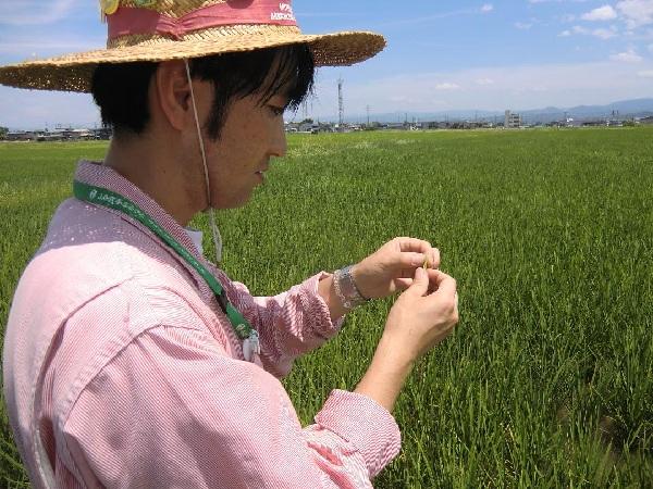 http://www.ucoop.or.jp/shouhin/shoku_shokuryo/sanchi/files/150714tanbo4.jpg