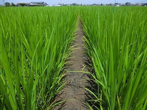 http://www.ucoop.or.jp/shouhin/shoku_shokuryo/sanchi/files/180725_iwate1.jpg