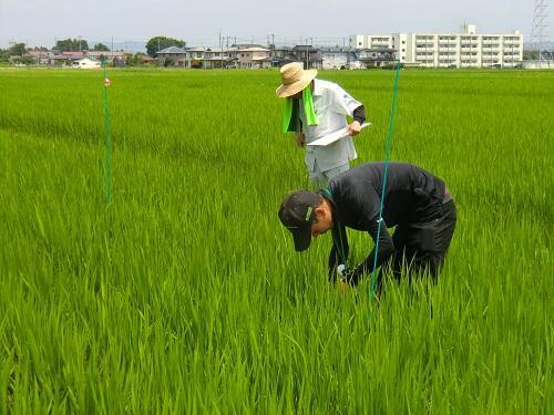 http://www.ucoop.or.jp/shouhin/shoku_shokuryo/sanchi/files/180725_iwate2.jpg