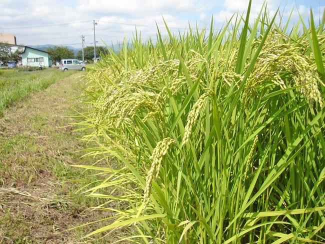 http://www.ucoop.or.jp/shouhin/shoku_shokuryo/sanchi/files/20110830b03.jpg