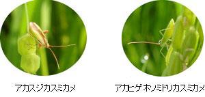 http://www.ucoop.or.jp/shouhin/shoku_shokuryo/sanchi/files/20110906%25EF%25BD%258D10.jpg