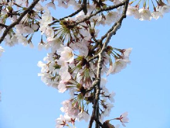 http://www.ucoop.or.jp/shouhin/shoku_shokuryo/sanchi/files/20120518ms01.jpg