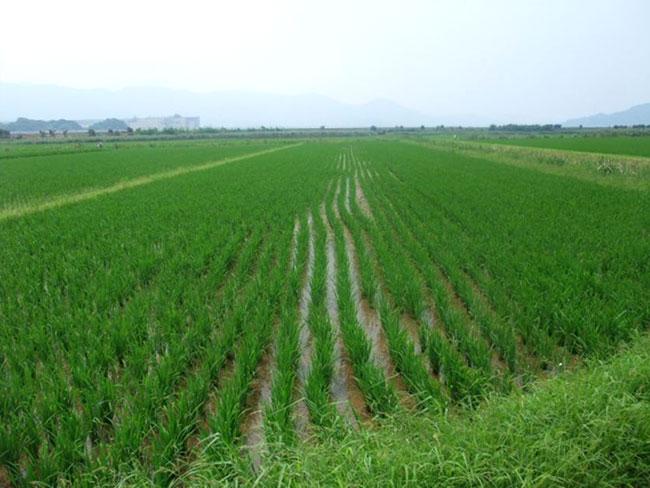 http://www.ucoop.or.jp/shouhin/shoku_shokuryo/sanchi/files/20120813sh01.jpg