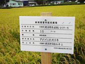 圃場には新規需要米圃場を示す看板