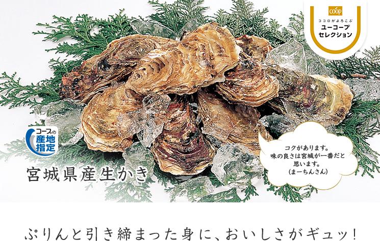 ぷりんと引き締まった身に、おいしさがギュッ! コープの産地指定 宮城県産生かき コクがあります。味の良さは宮城が一番だと思います。(まーちんさん)